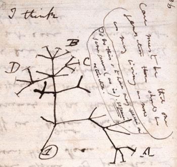 Darwin - I think